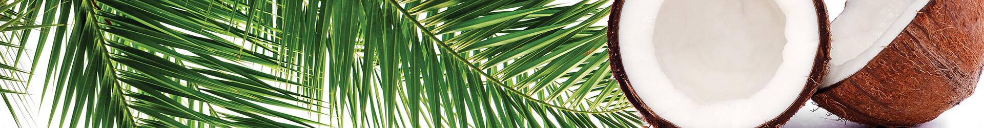 La gamme de soins à l'huile de coco natessance