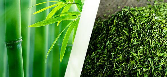 actif-produit-bambou-the-vert-bio-natessance